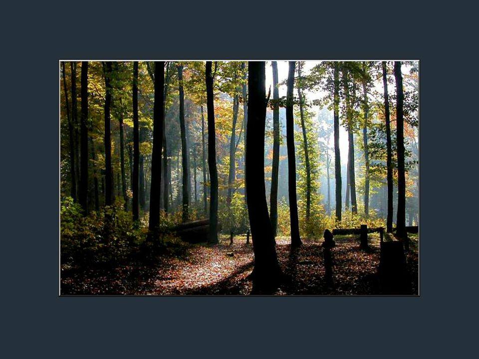Entendez-vous le chant très doux de la forêt; les trilles des oiseaux piailleurs; la course des libellules sur les feuillages humides