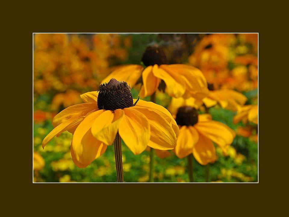 Entendez-vous le chant discret et furtif des feuillages et des herbes dans les champs inondés de soleil.
