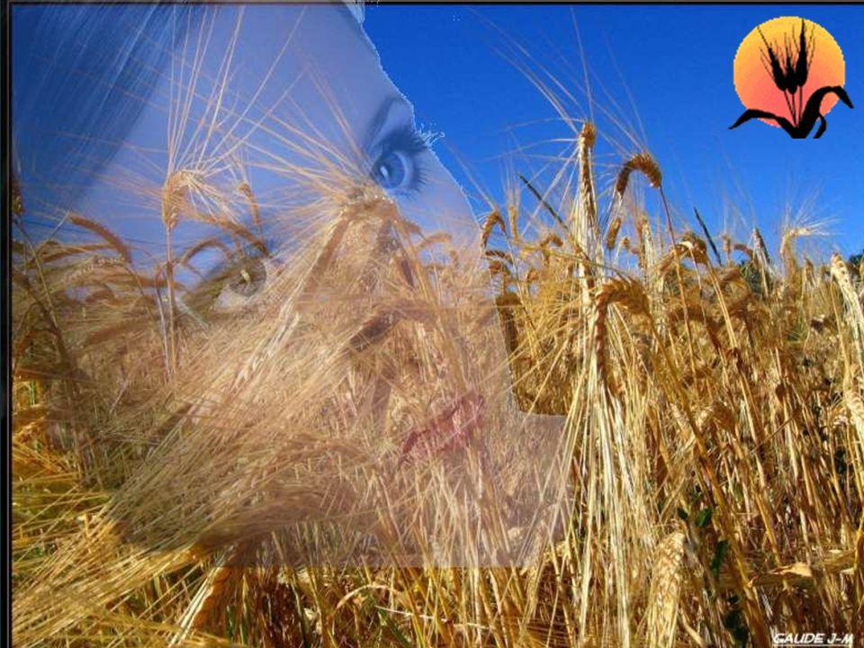 La vie est un long voyage, parsemée d'embûches. Il suffit d'être un petit grain de blé. Petit oui, mais combien entêté!