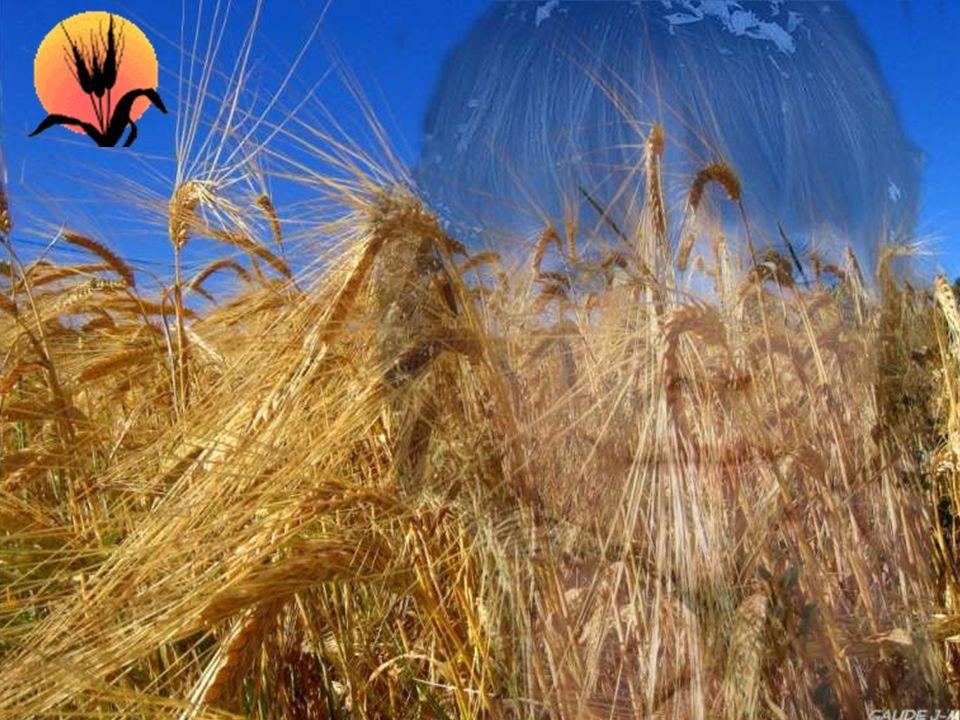 Une gerbe de blé aux cheveux blonds Aussi belle que le sol où elle aura poussé; Car dans un sol pauvre et à l'abandon, Je serais morte étouffée. Mais