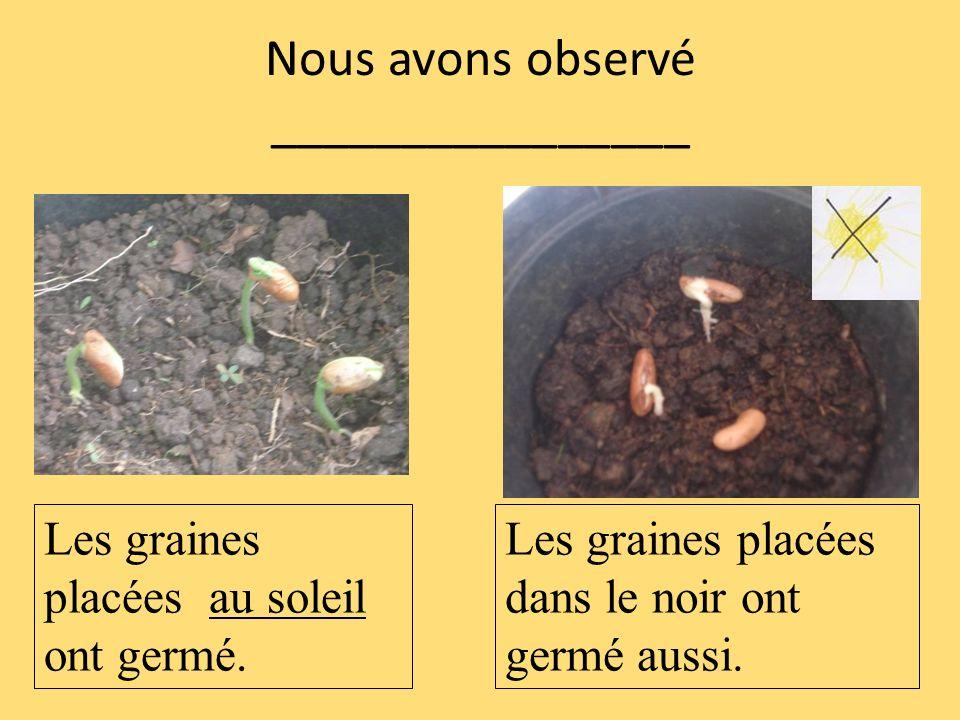 Nous avons observé ________________ Les graines placées au soleil ont germé. Les graines placées dans le noir ont germé aussi.