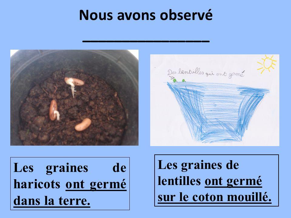 Nous avons observé ________________ Les graines de haricots ont germé dans la terre. Les graines de lentilles ont germé sur le coton mouillé.