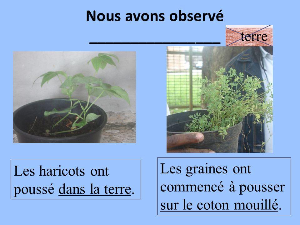 Nous avons observé ________________ Les haricots ont poussé dans la terre. Les graines ont commencé à pousser sur le coton mouillé. terre