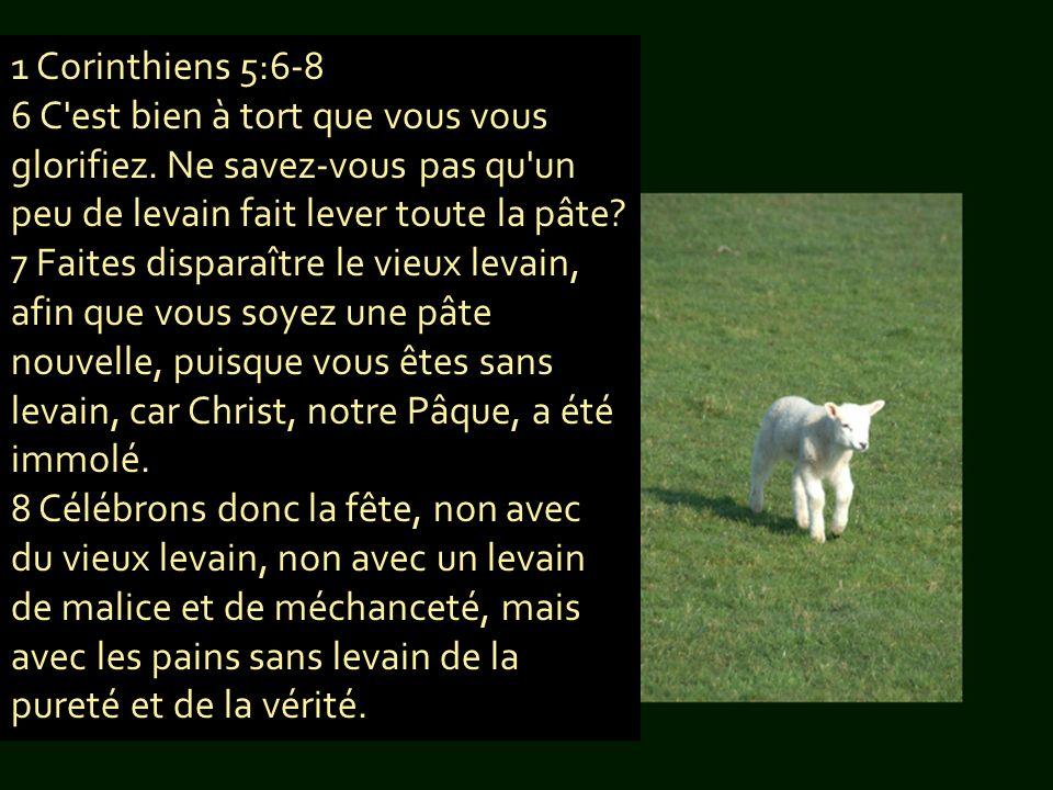 1 Corinthiens 5:6-8 6 C'est bien à tort que vous vous glorifiez. Ne savez-vous pas qu'un peu de levain fait lever toute la pâte? 7 Faites disparaître