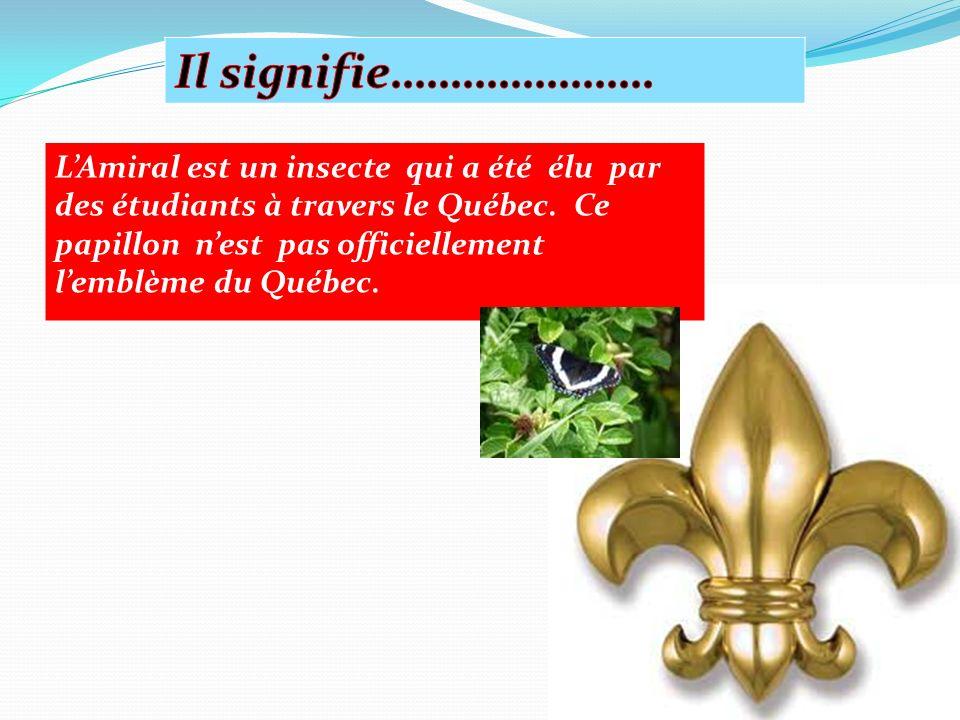 LAmiral est un insecte qui a été élu par des étudiants à travers le Québec.