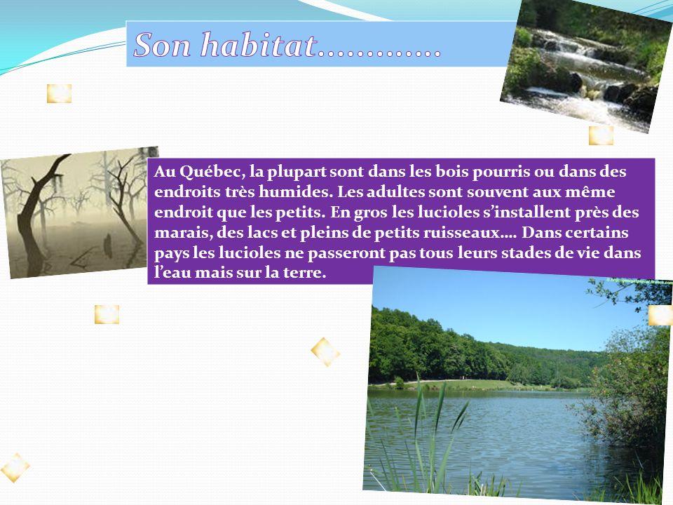 Au Québec, la plupart sont dans les bois pourris ou dans des endroits très humides.