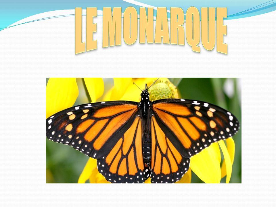 Étape #1 Lœuf du monarque Étape #2 La chenille Étape#3 chrysalides Étape#4 adulte
