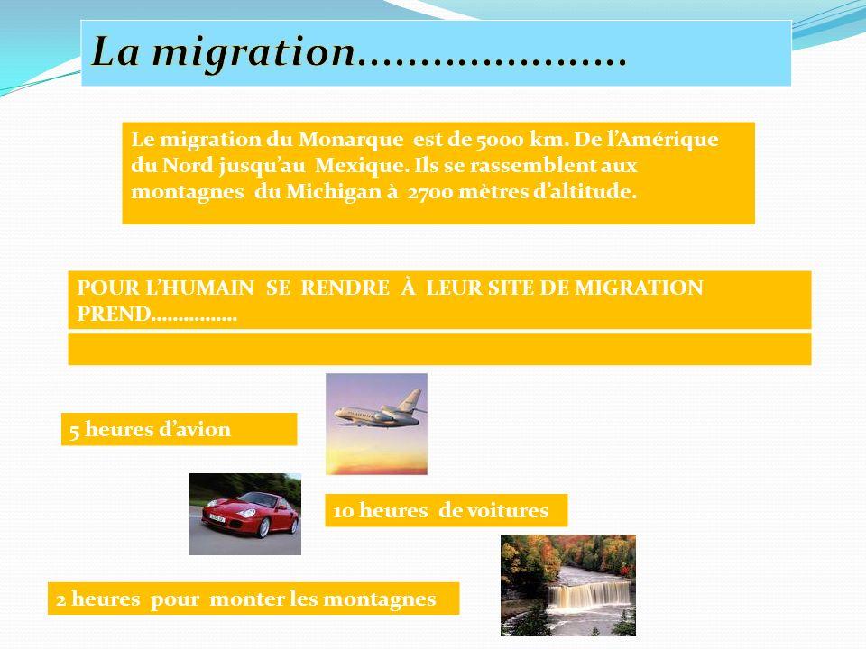 Le migration du Monarque est de 5000 km.De lAmérique du Nord jusquau Mexique.