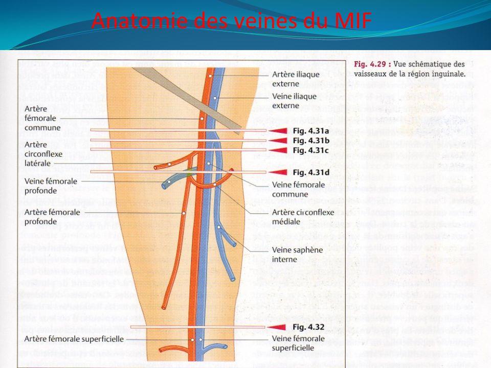Anatomie des veines du MIF