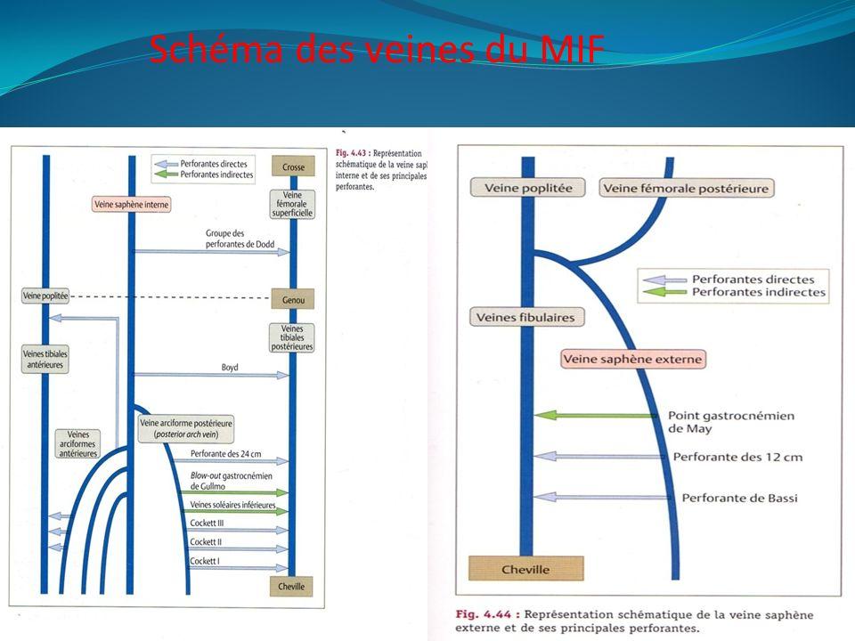 Schéma des veines du MIF
