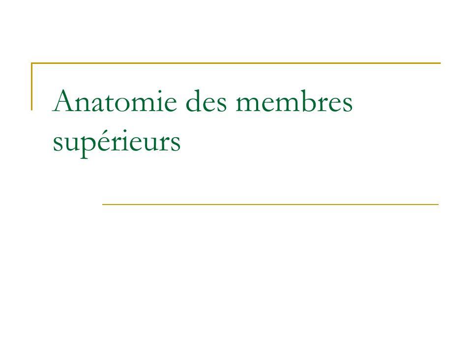 Anatomie des membres supérieurs