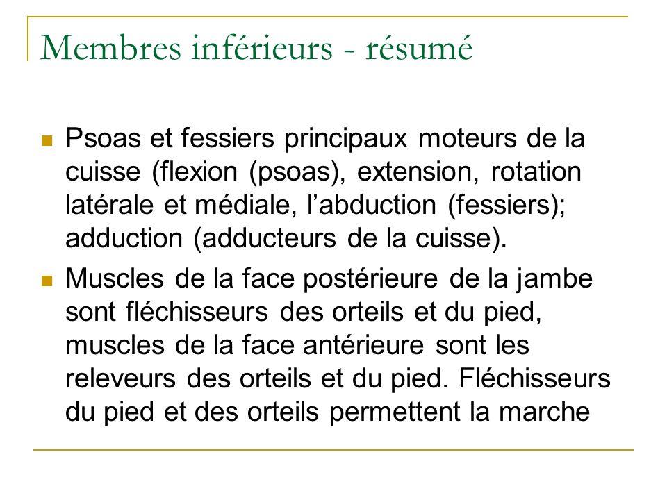 Membres inférieurs - résumé Psoas et fessiers principaux moteurs de la cuisse (flexion (psoas), extension, rotation latérale et médiale, labduction (f
