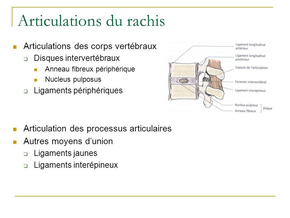 Articulations du rachis Articulations des corps vertébraux Disques intervertébraux Anneau fibreux périphérique Nucleus pulposus Ligaments périphérique