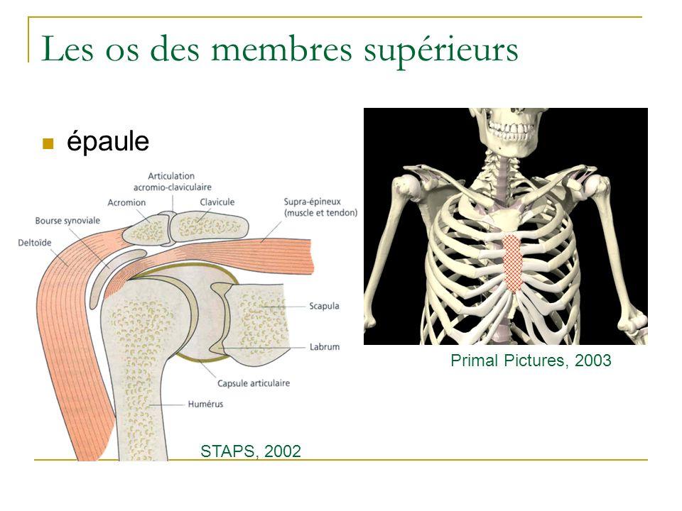 Les os des membres supérieurs épaule Primal Pictures, 2003 STAPS, 2002