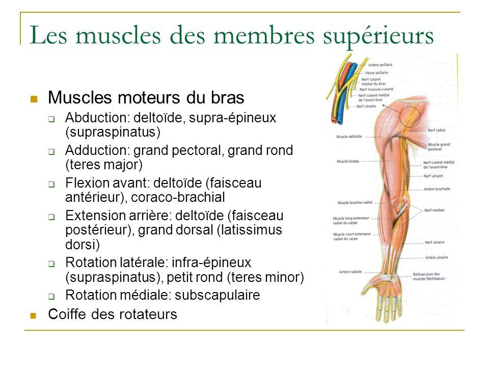Les muscles des membres supérieurs Muscles moteurs du bras Abduction: deltoïde, supra-épineux (supraspinatus) Adduction: grand pectoral, grand rond (t