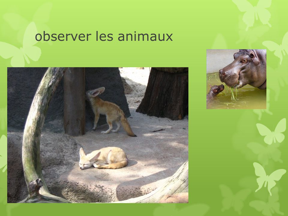 observer les animaux