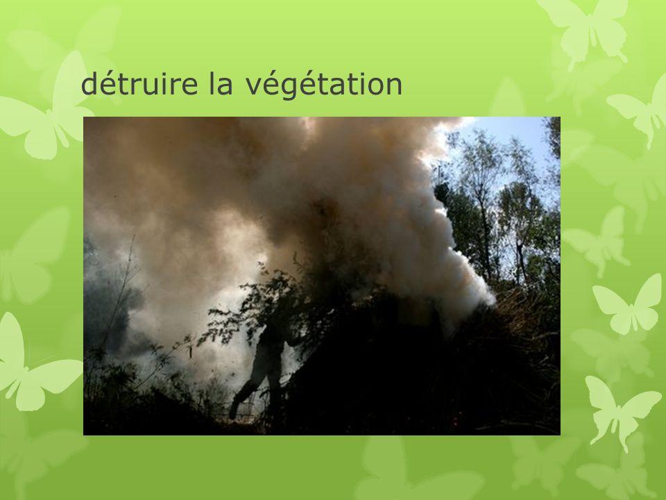 détruire la végétation