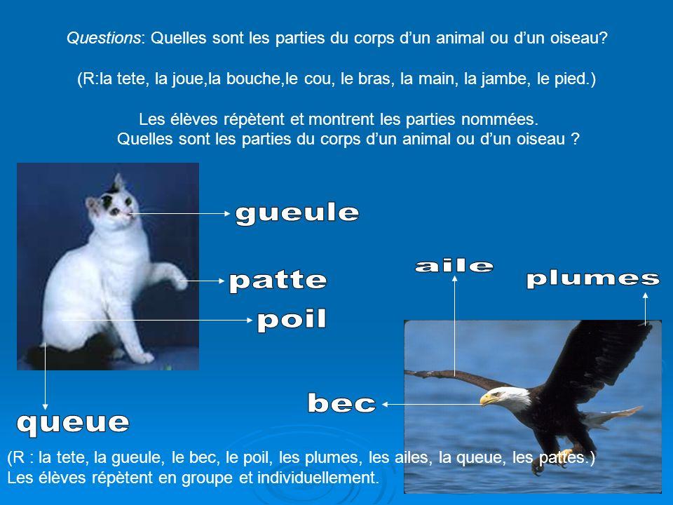 Questions: Quelles sont les parties du corps dun animal ou dun oiseau? (R:la tete, la joue,la bouche,le cou, le bras, la main, la jambe, le pied.) Les