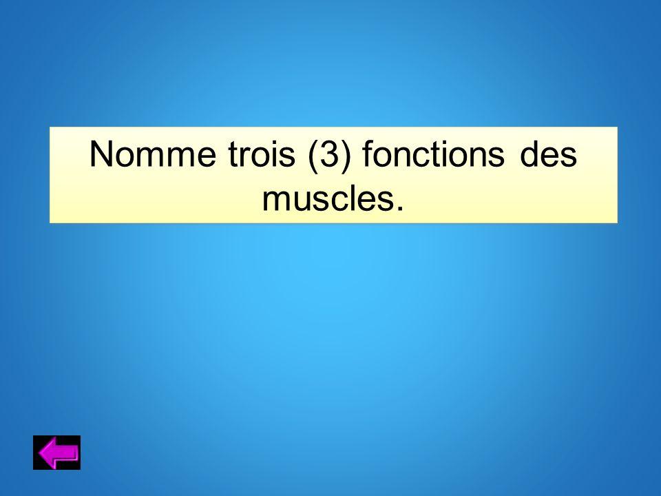Nomme trois (3) fonctions des muscles.