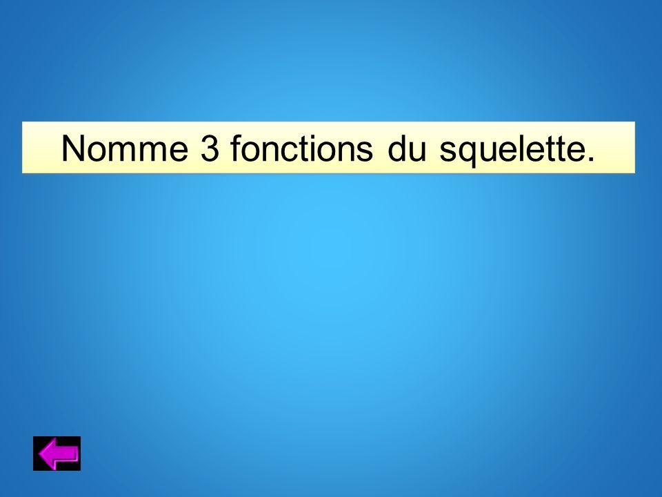 Nomme 3 fonctions du squelette.