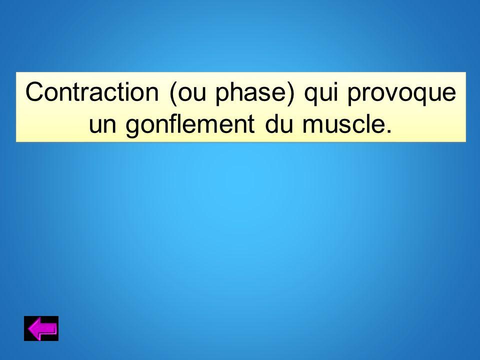 Contraction (ou phase) qui provoque un gonflement du muscle.