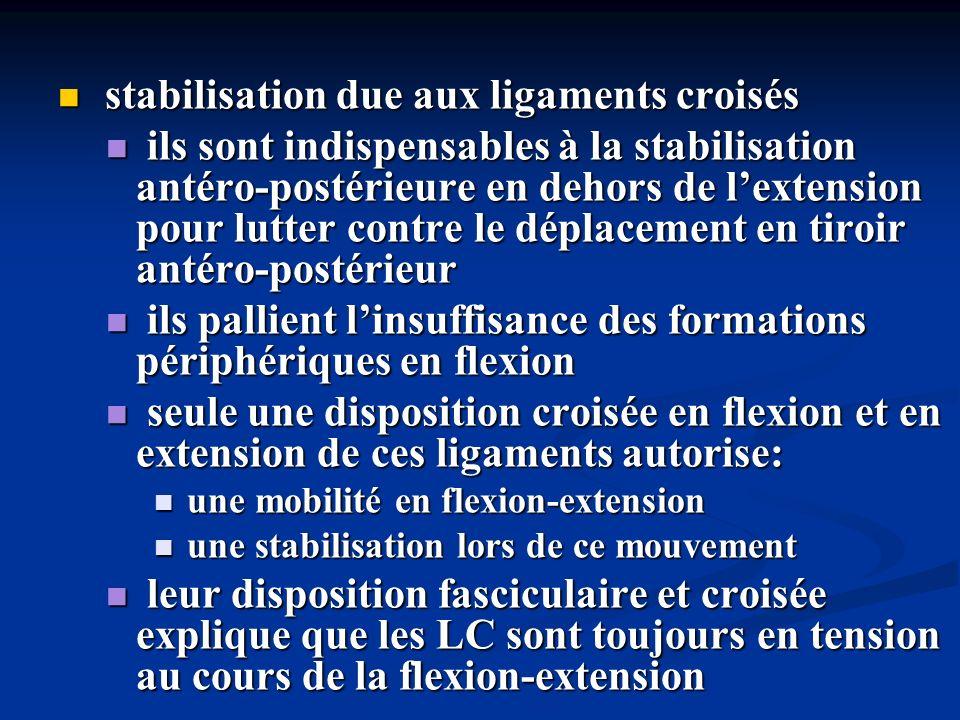 stabilisation due aux ligaments croisés stabilisation due aux ligaments croisés ils sont indispensables à la stabilisation antéro-postérieure en dehor