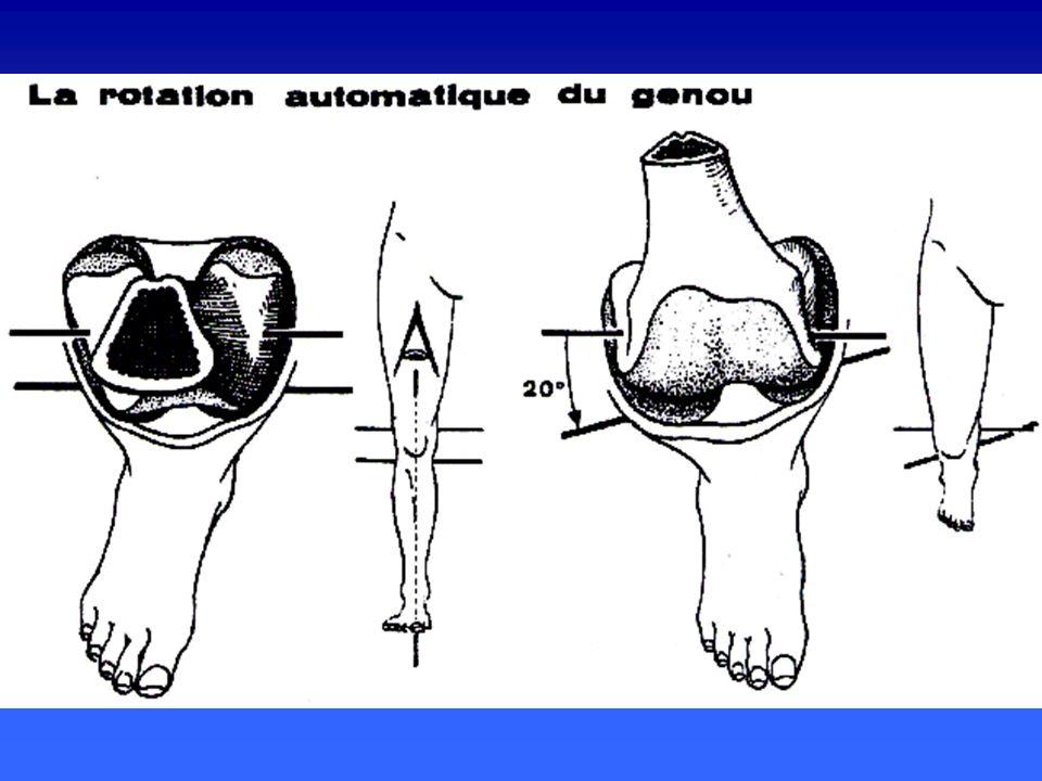 inégalité des courbures condyliennes inégalité des courbures condyliennes rayon de courbure et diamètre du condyle externe sont plus petits rayon de courbure et diamètre du condyle externe sont plus petits axe de flexion, axe bicondylien, est oblique vers le bas et le dehors axe de flexion, axe bicondylien, est oblique vers le bas et le dehors LA STABILISATION LIGAMENTAIRE