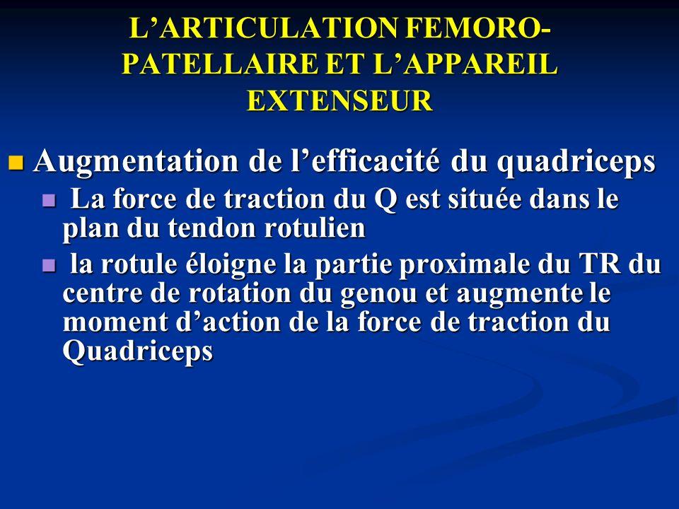 LARTICULATION FEMORO- PATELLAIRE ET LAPPAREIL EXTENSEUR La stabilisation de la rotule est indispensable du fait de la résultante des forces de traction qui présente une composante subluxante externe La stabilisation de la rotule est indispensable du fait de la résultante des forces de traction qui présente une composante subluxante externe en flexion, outre la meilleur concordance articulaire fémoro-patellaire, 2 mécanismes stabilisateurs interviennent: en flexion, outre la meilleur concordance articulaire fémoro-patellaire, 2 mécanismes stabilisateurs interviennent: la force de placage de la rotule la force de placage de la rotule lalignement en flexion du système extenseur par la rotation interne automatique qui déporte en DD la Tubérosité Tibiale Antérieure lalignement en flexion du système extenseur par la rotation interne automatique qui déporte en DD la Tubérosité Tibiale Antérieure