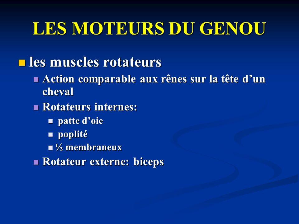 LES MOTEURS DU GENOU les muscles rotateurs les muscles rotateurs Action comparable aux rênes sur la tête dun cheval Action comparable aux rênes sur la