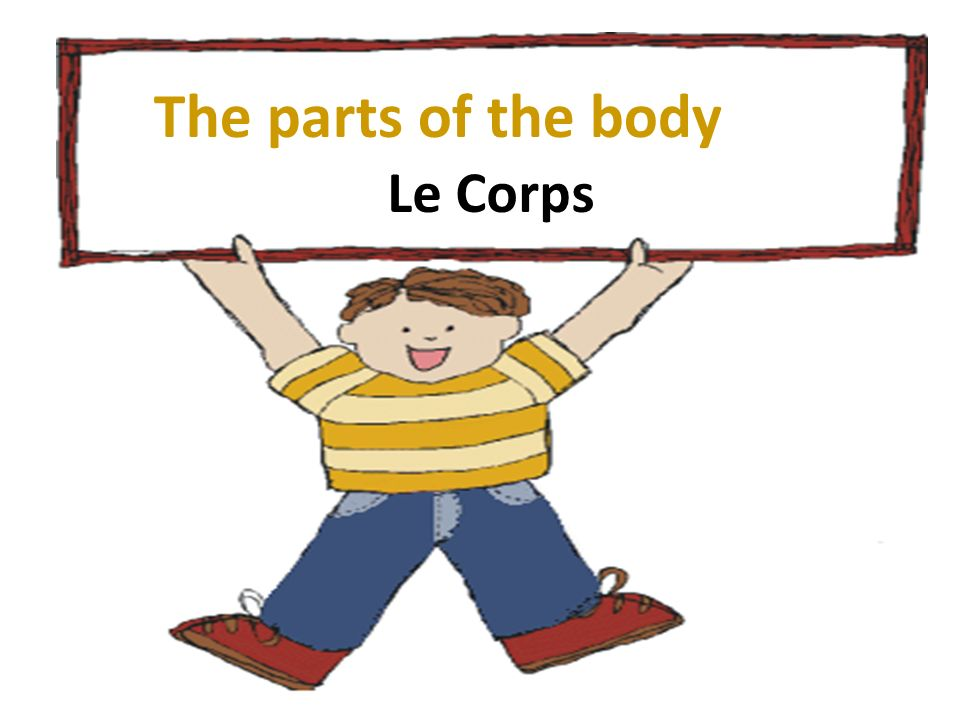 The parts of the body Le Corps