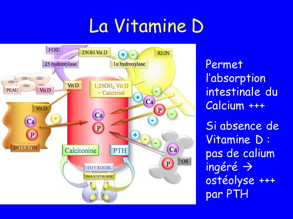 La Vitamine D Permet labsorption intestinale du Calcium +++ Si absence de Vitamine D : pas de calium ingéré ostéolyse +++ par PTH