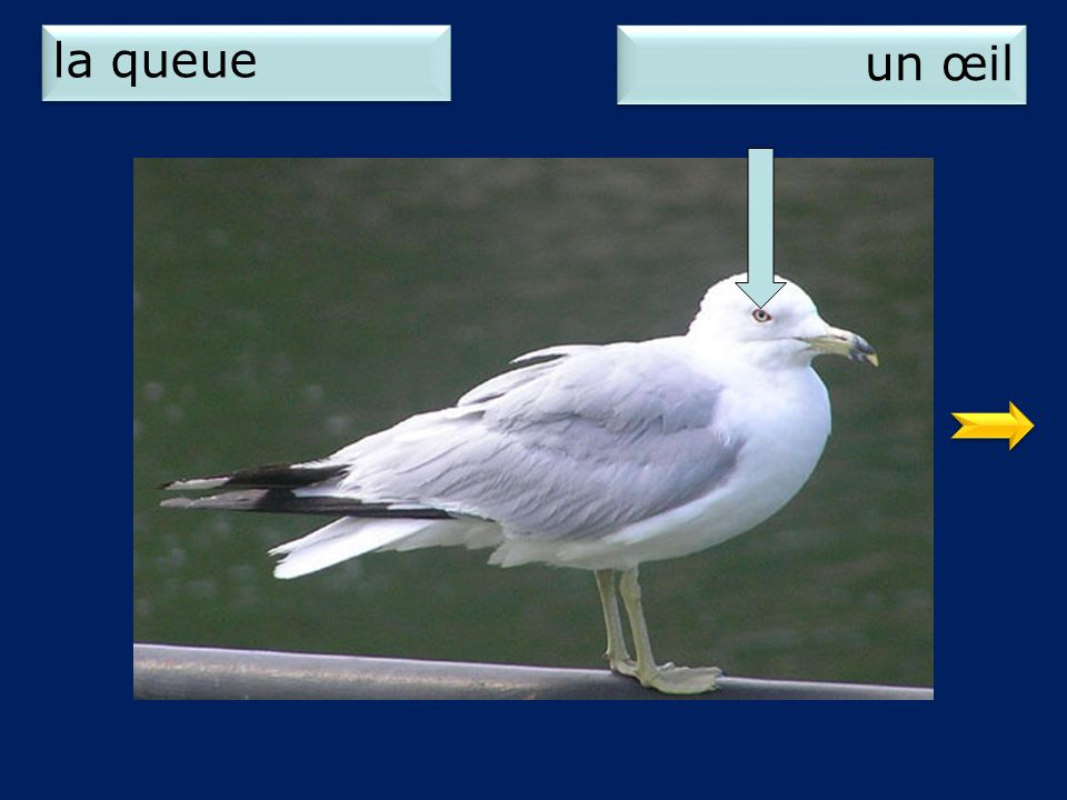 2 un œil la queue