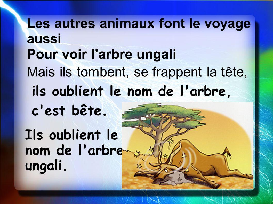 Les autres animaux font le voyage aussi Pour voir l'arbre ungali Mais ils tombent, se frappent la tête, ils oublient le nom de l'arbre, c'est bête. Il