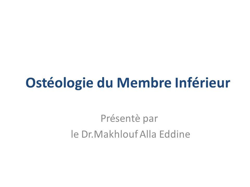 Ostéologie du Membre Inférieur Présentè par le Dr.Makhlouf Alla Eddine