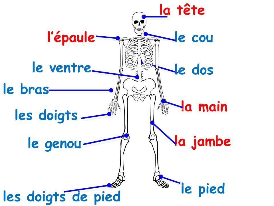 la tête le bras la main les doigts lépaule le pied la jambe les doigts de pied le ventre le dos le genou le cou