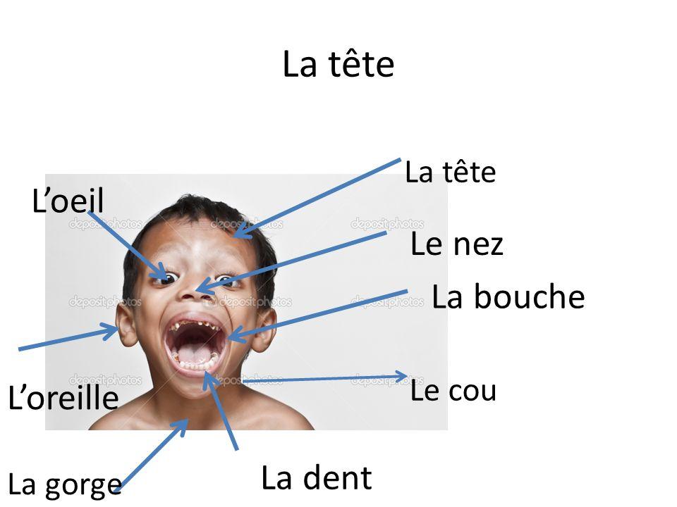 La tête Le cou La bouche Le nez Loeil Loreille La dent La gorge