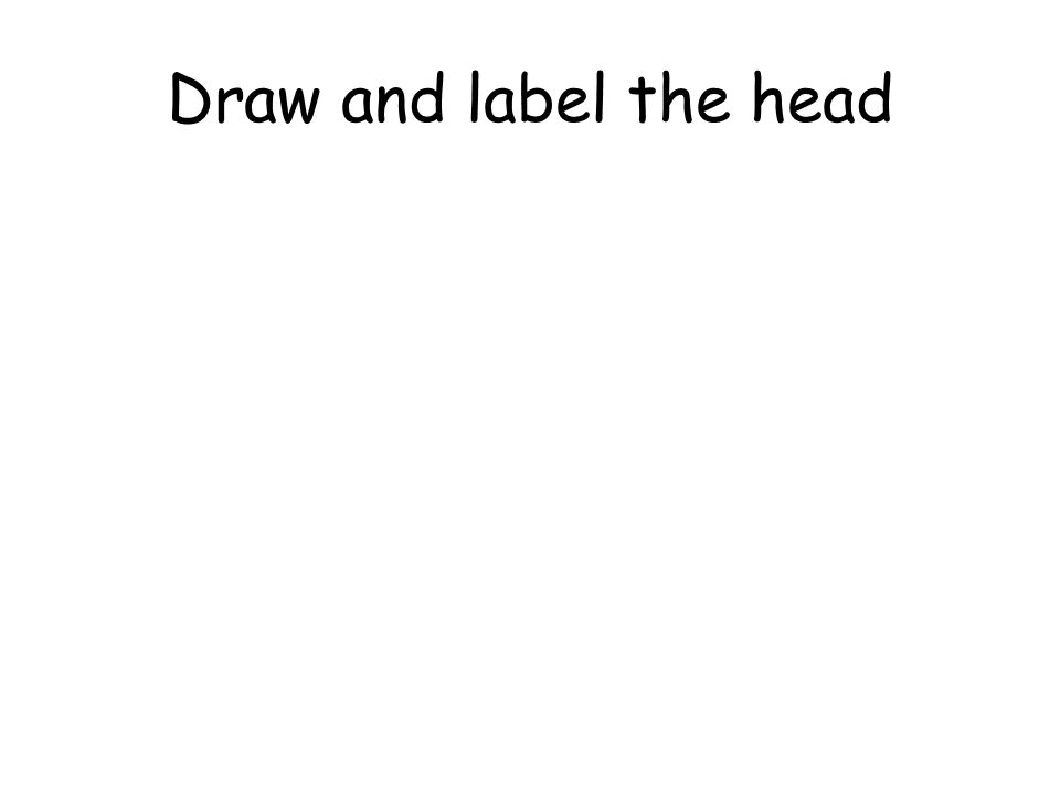 Draw and label the head
