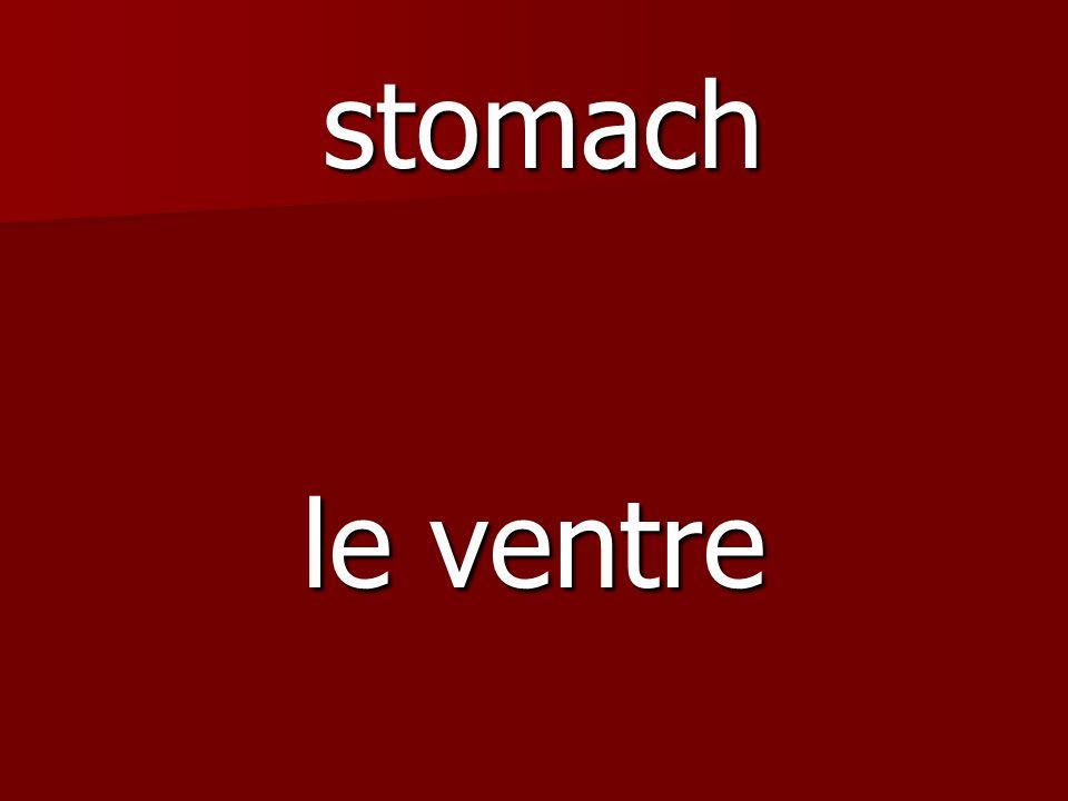 le ventre stomach