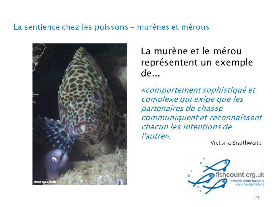 24 La murène et le mérou représentent un exemple de...