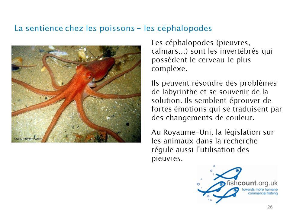 La sentience chez les poissons - les céphalopodes 26 Les céphalopodes (pieuvres, calmars...) sont les invertébrés qui possèdent le cerveau le plus complexe.