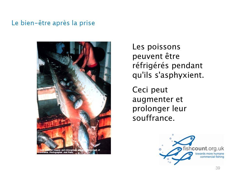 Les poissons peuvent être réfrigérés pendant qu ils s asphyxient.