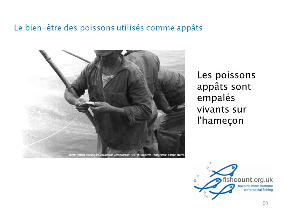 Les poissons appâts sont empalés vivants sur l hameçon 50 Credit: National Oceanic and Atmospheric Administration/ Dept.