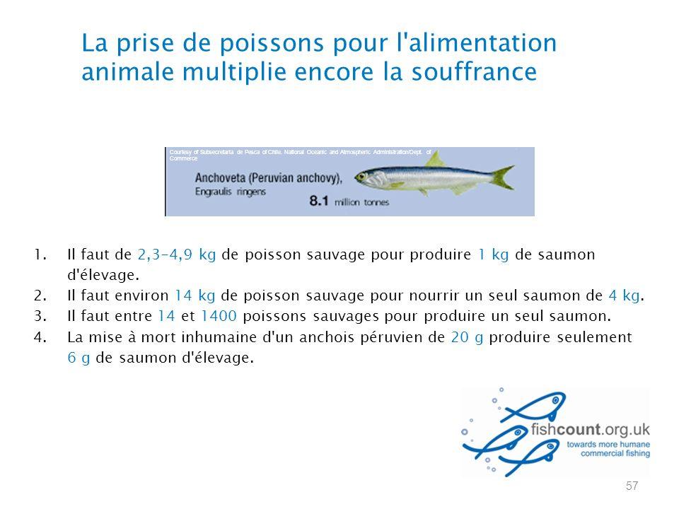La prise de poissons pour l alimentation animale multiplie encore la souffrance 1.Il faut de 2,3-4,9 kg de poisson sauvage pour produire 1 kg de saumon d élevage.
