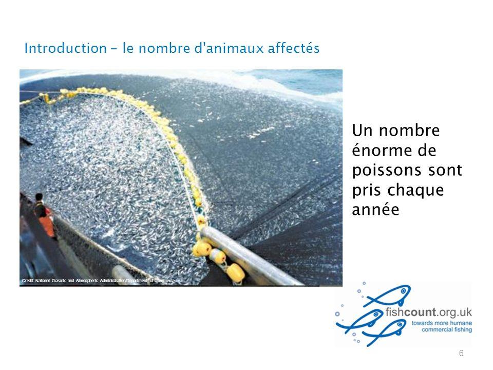 Un nombre énorme de poissons sont pris chaque année Introduction - le nombre d animaux affectés 6 Credit: National Oceanic and Atmospheric Administration/Department of Commerce.