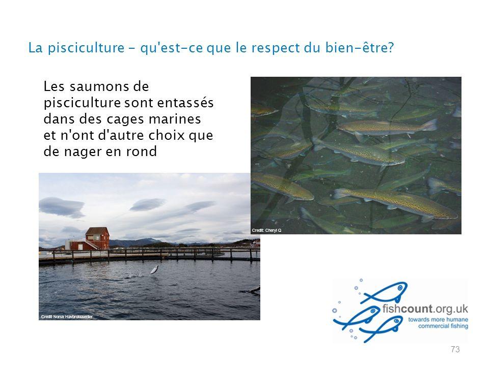 73 Les saumons de pisciculture sont entassés dans des cages marines et n ont d autre choix que de nager en rond Credit: Cheryl Q Credit Norsk Havbrukssenter La pisciculture - qu est-ce que le respect du bien-être