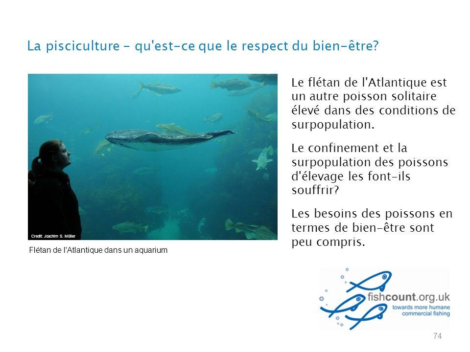 74 Le flétan de l Atlantique est un autre poisson solitaire élevé dans des conditions de surpopulation.