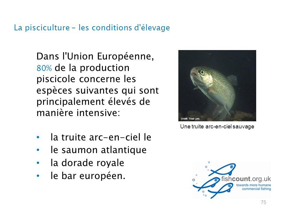 La pisciculture - les conditions d élevage Dans l Union Européenne, 80% de la production piscicole concerne les espèces suivantes qui sont principalement élevés de manière intensive: la truite arc-en-ciel le le saumon atlantique la dorade royale le bar européen.