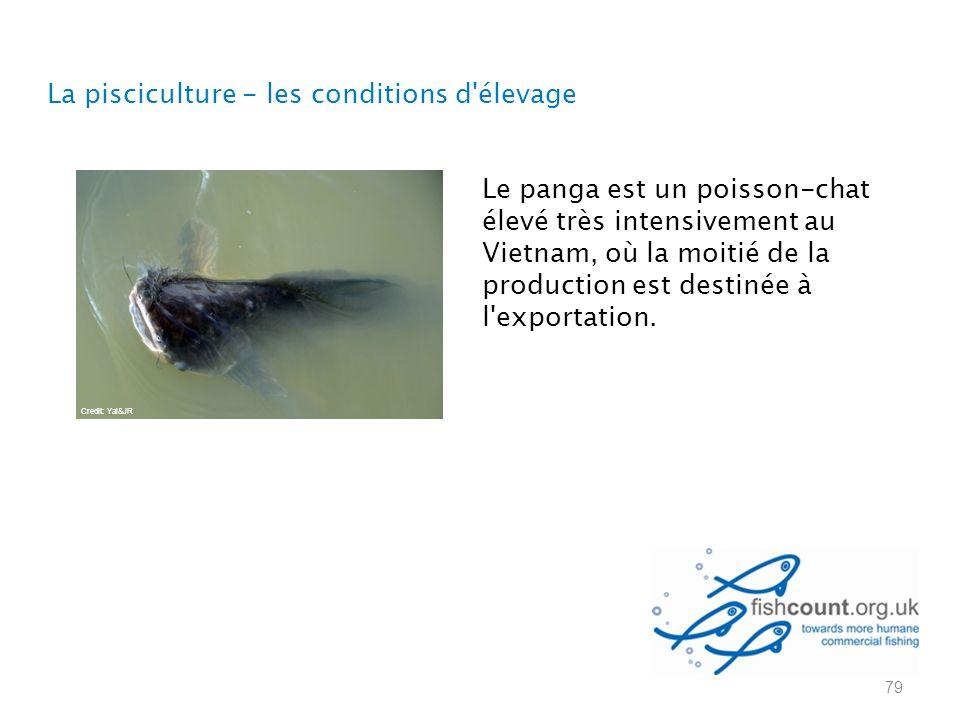 Le panga est un poisson-chat élevé très intensivement au Vietnam, où la moitié de la production est destinée à l exportation.