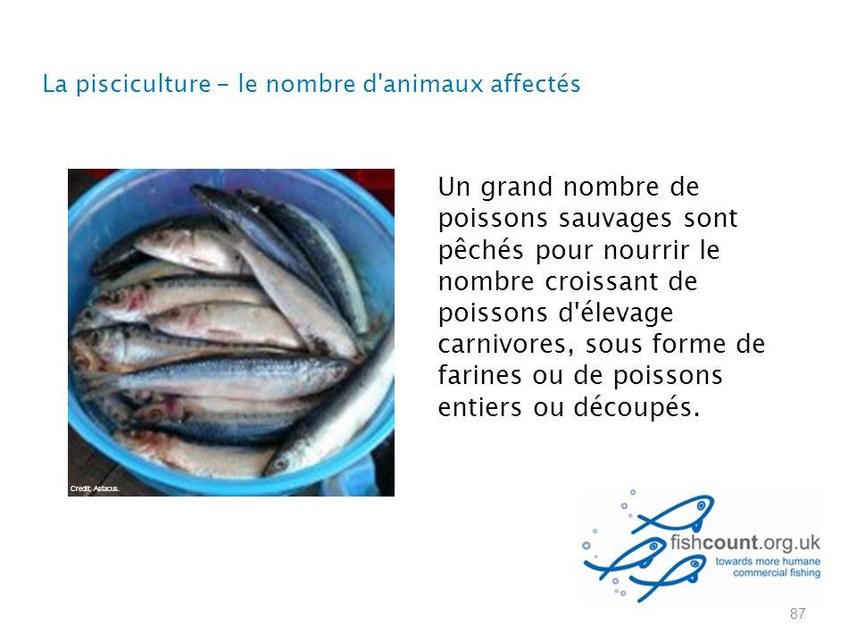 La pisciculture - le nombre d animaux affectés 87 Un grand nombre de poissons sauvages sont pêchés pour nourrir le nombre croissant de poissons d élevage carnivores, sous forme de farines ou de poissons entiers ou découpés.