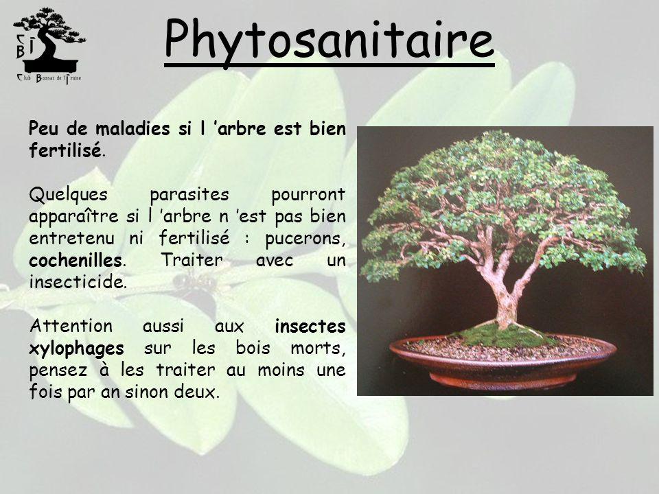 Phytosanitaire Peu de maladies si l arbre est bien fertilisé. Quelques parasites pourront apparaître si l arbre n est pas bien entretenu ni fertilisé